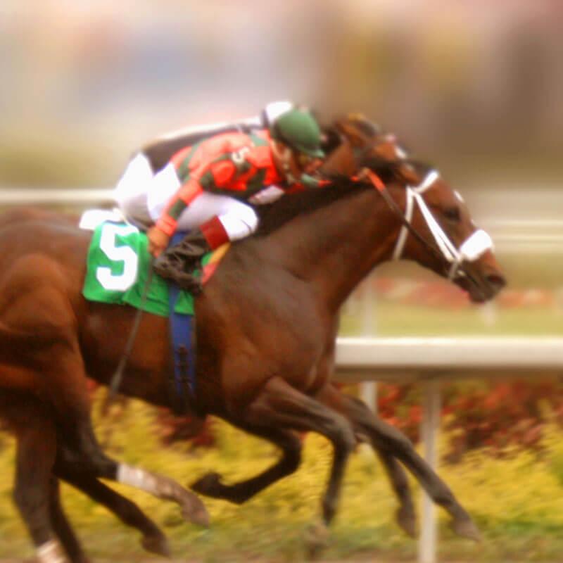 horseracing-stock-spslider.jpg