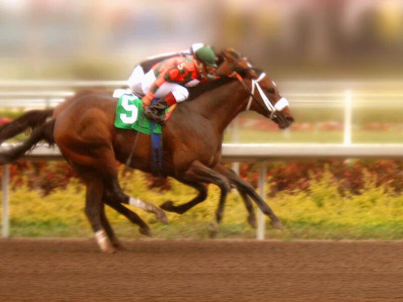 horse-raceing-offer-block.jpg